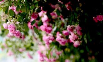 娄东新村:小城花语是从容