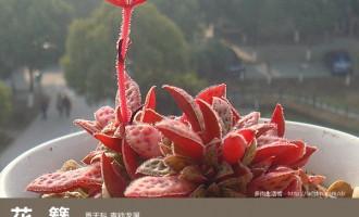 多肉生活馆:花簪