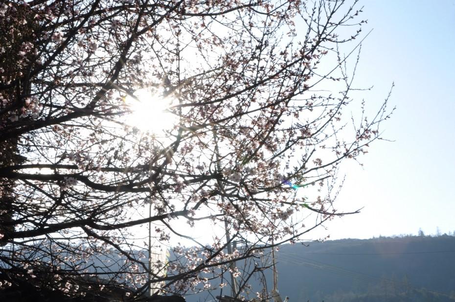 巴松措 桃花 西藏