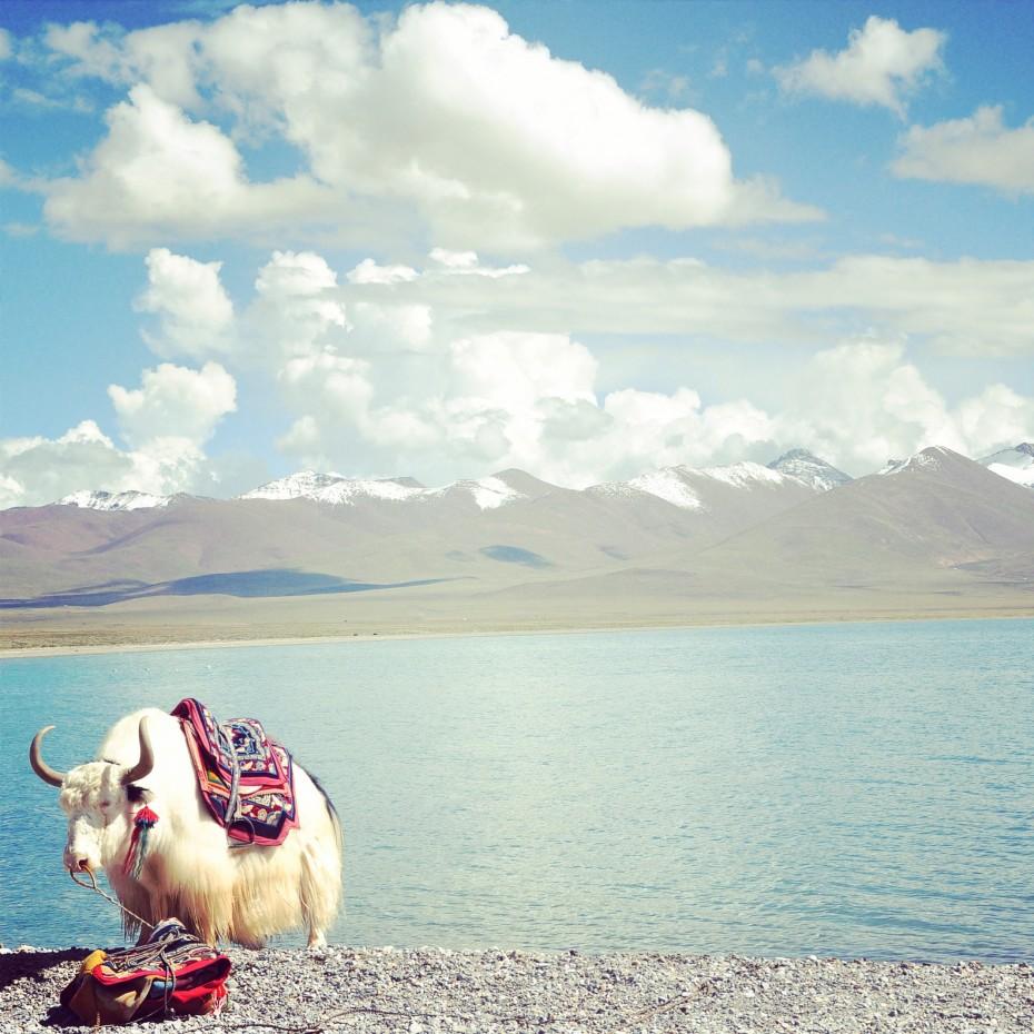 西藏:心灵之旅
