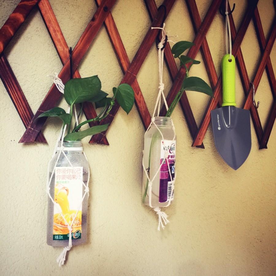 手作:空瓶子别扔了,挂起来养绿植更美