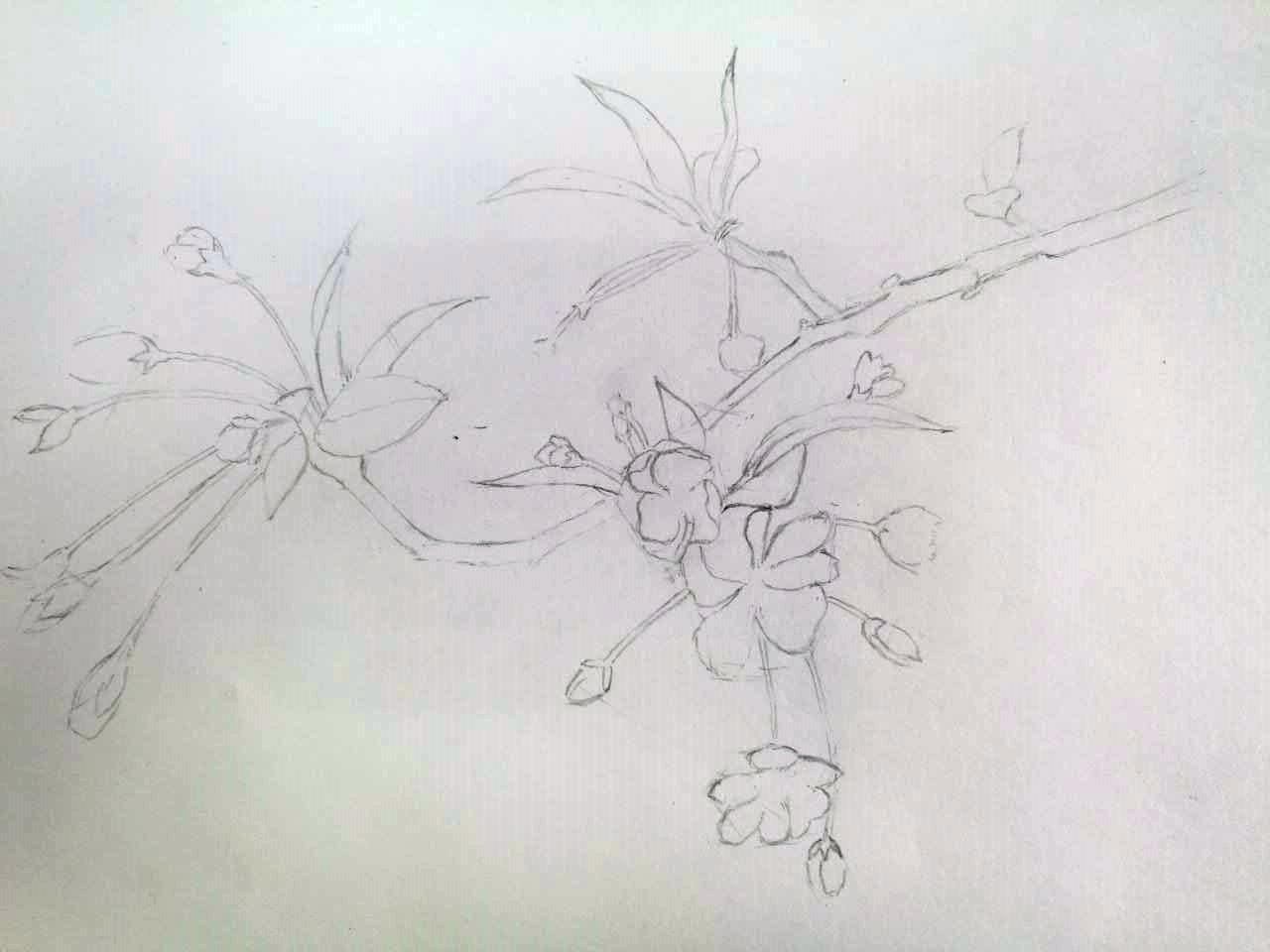 画画儿:铅彩垂丝海棠彩
